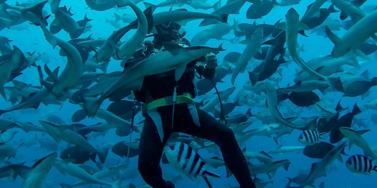 les dents de la mer version fidji