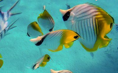 Plonger aux Fidji pour les nuls