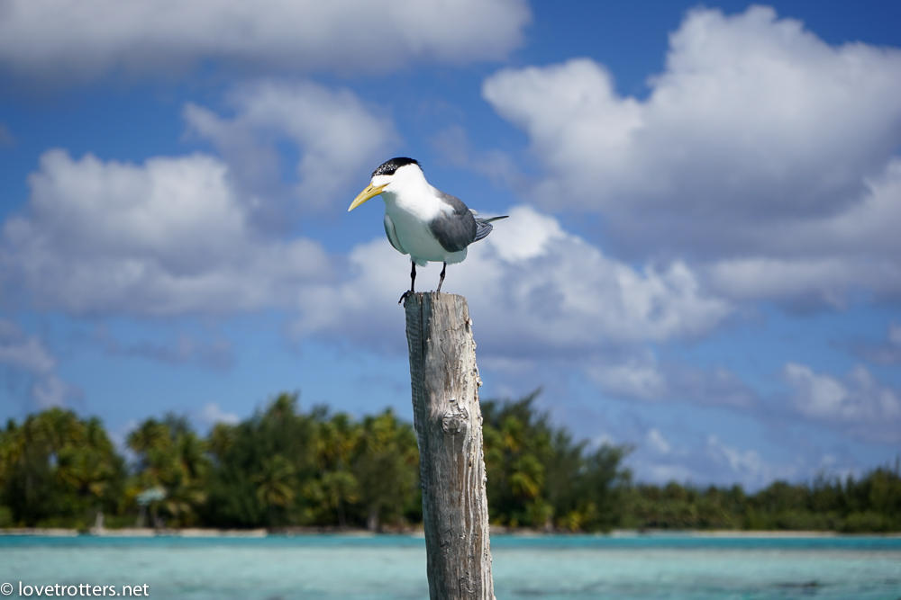 Polynesie francaise bora bora 02300