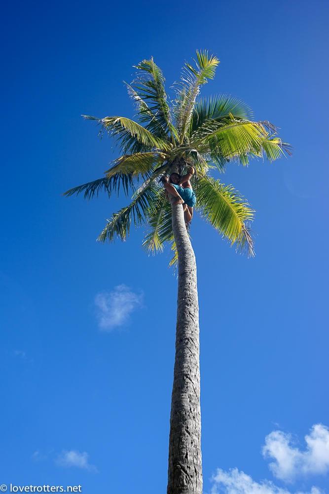 Polynesie francaise bora bora cocotier homme singe