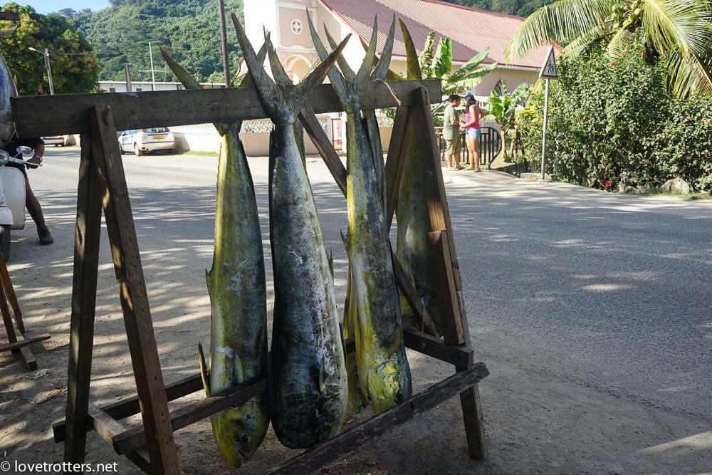 Polynesie francaise bora bora dorade MahiMahi