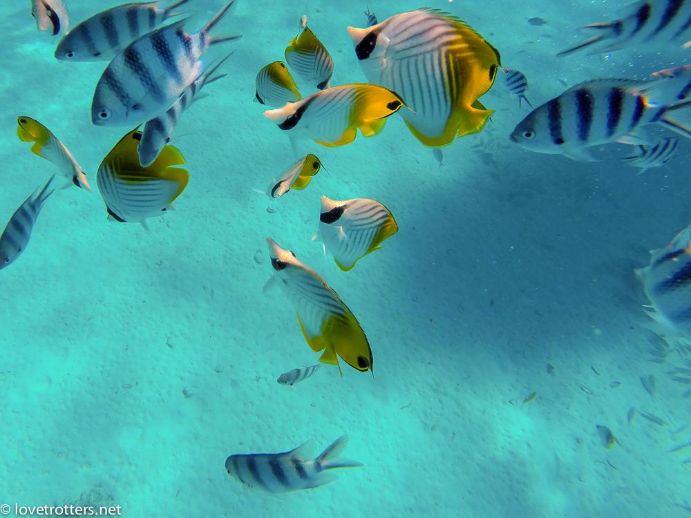 Polynesie francaise bora bora poissons