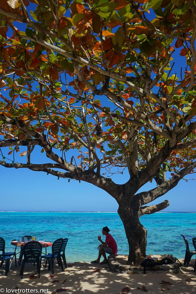 picnic au bord du lagon de moorea