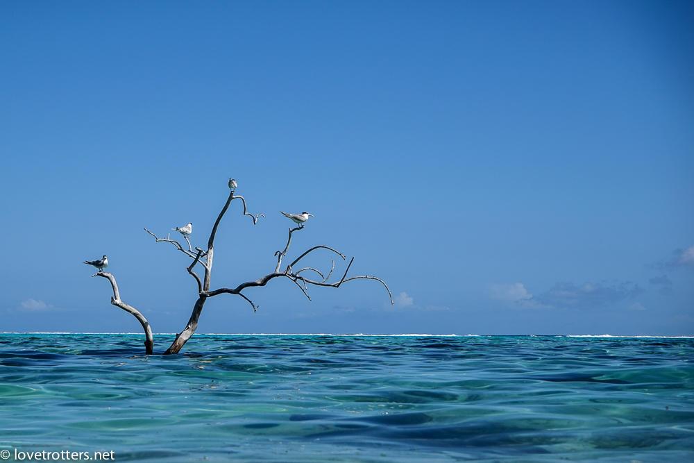 le lagon de Moorea