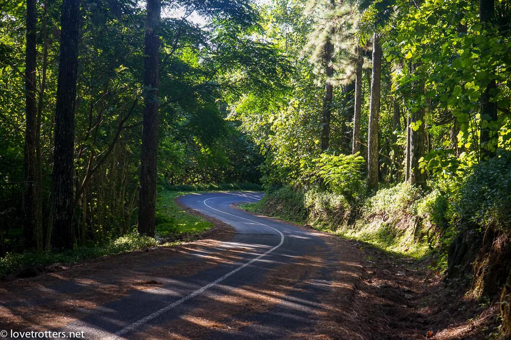 Route du belvédère de Moorea