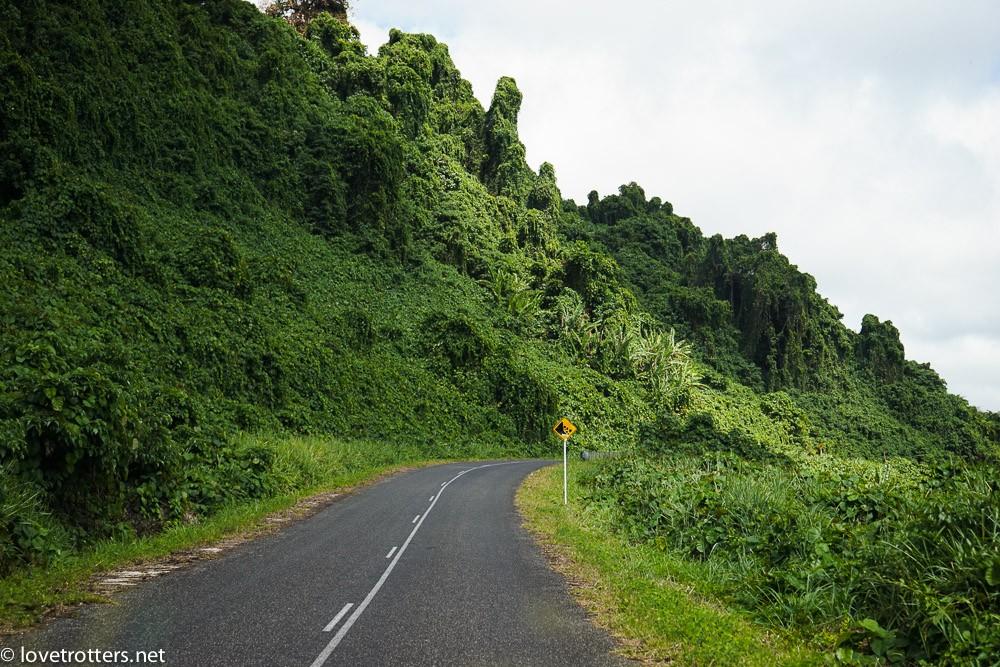 vanuatu-port-vila-evergreen-06901