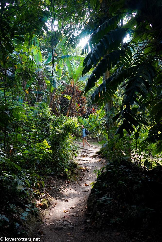 vanuatu-port-vila-evergreen-07139