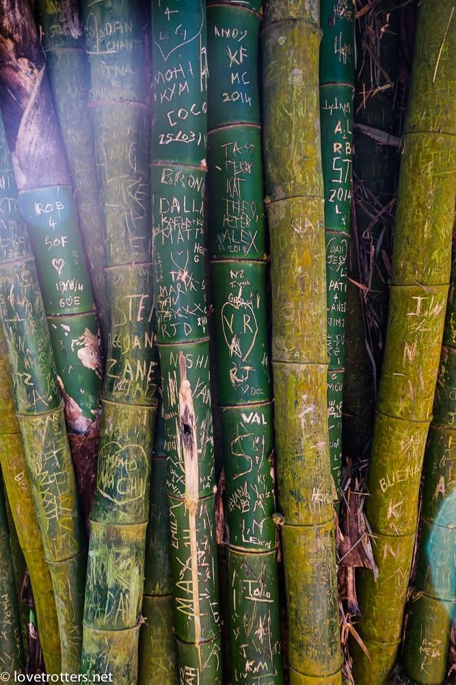 vanuatu-port-vila-evergreen-07154