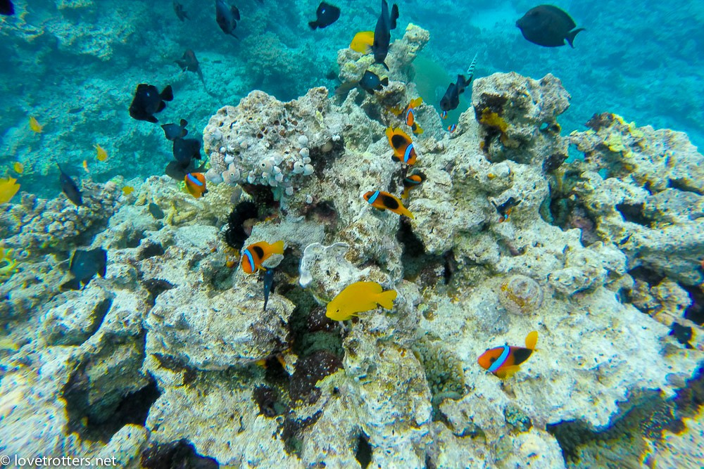 vanuatu-port-vila-underwater-nemo
