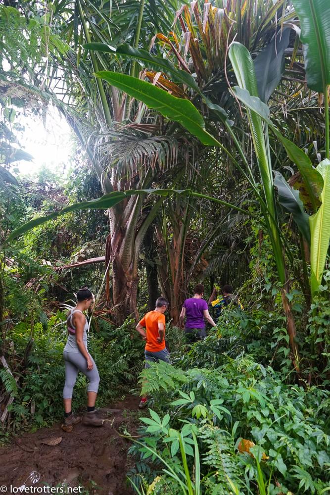 randonnée dans la jungle en route vers le millenium cave