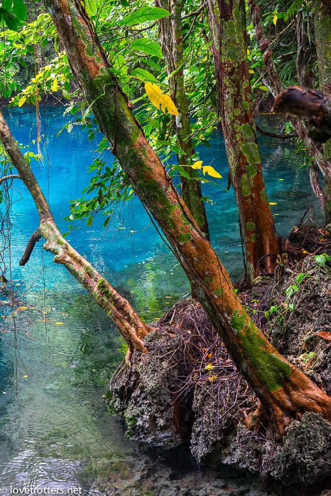 vanuatu-santo-riri-riri-blue-hole-07907
