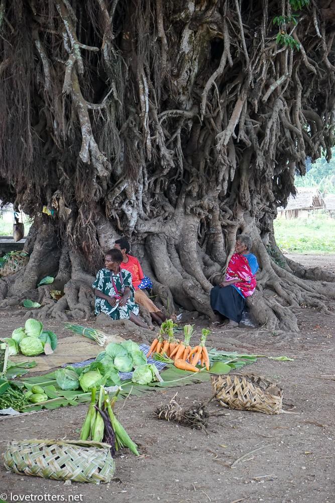vanuatu-tanna-tree-house-volcano-05940