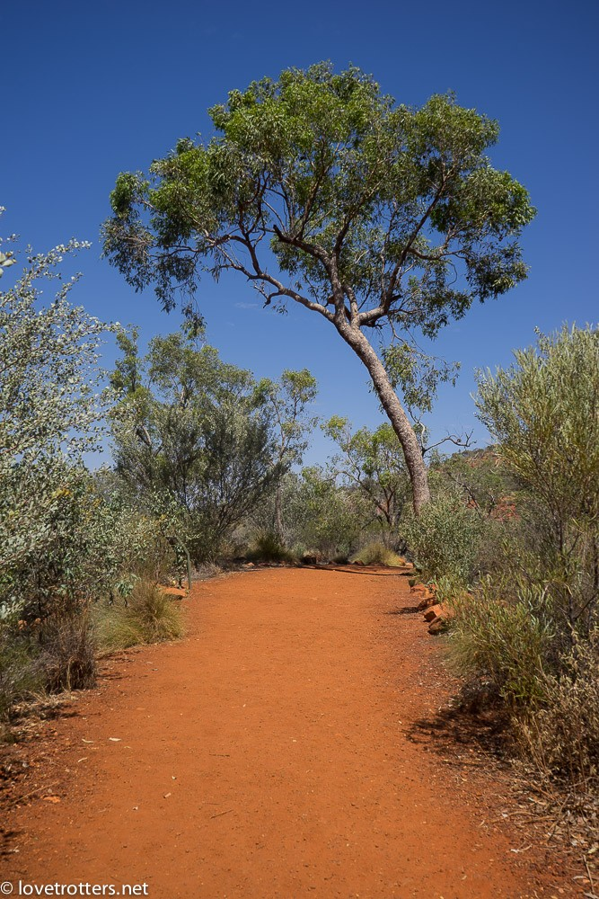 australia-northern-territory-kings-canyon-09627