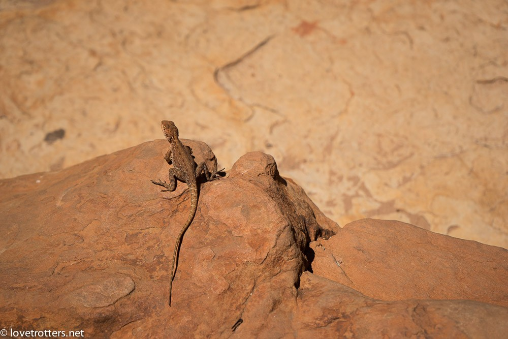 australia-northern-territory-kings-canyon-09671