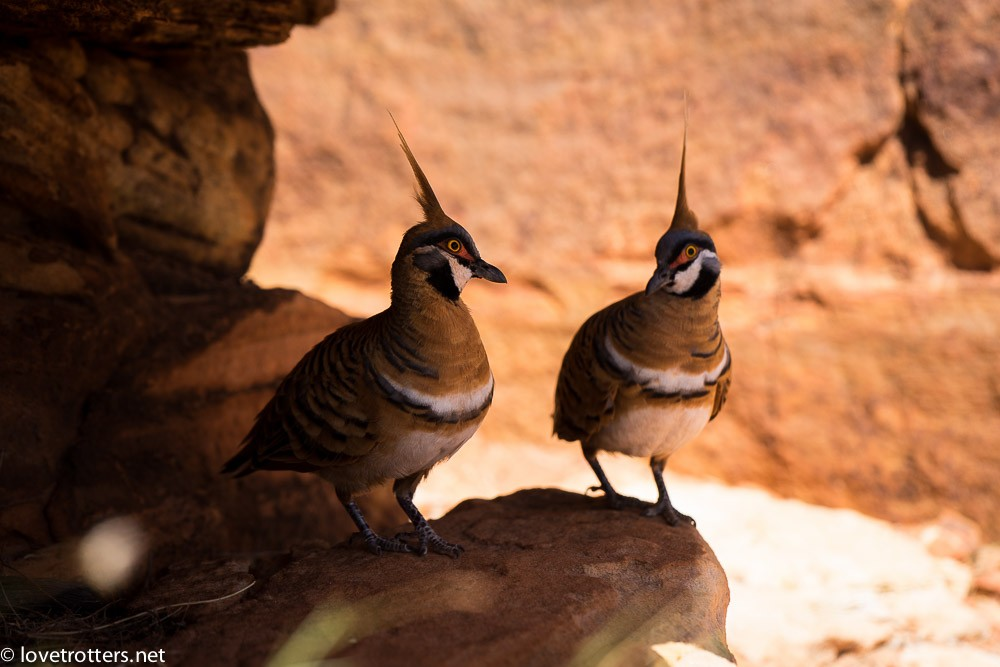australia-northern-territory-kings-canyon-09741