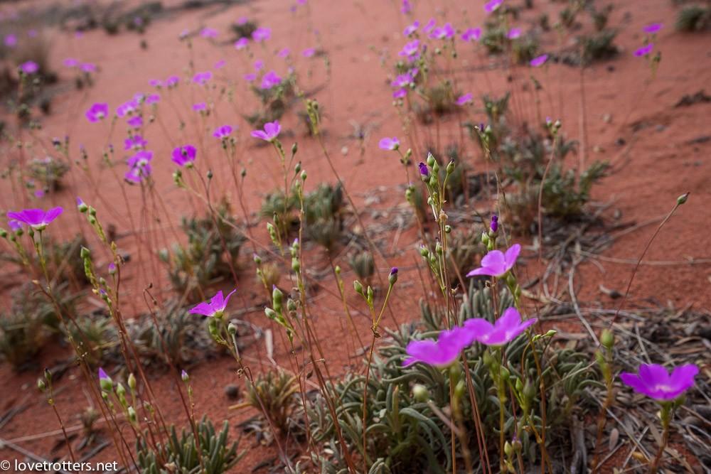 australia-northern-territory-uluru-00262