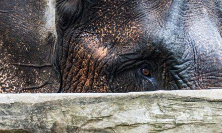 Trek, bamboo rafting et safari à dos d'éléphants en Thaïlande