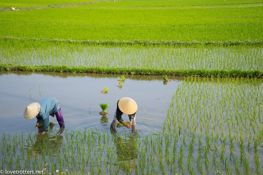 Vietnam - Hoi An-04495