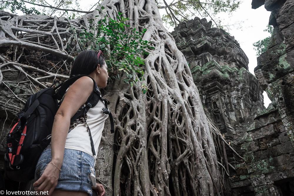 cambodia-siem-reap-ta-phrom-06835