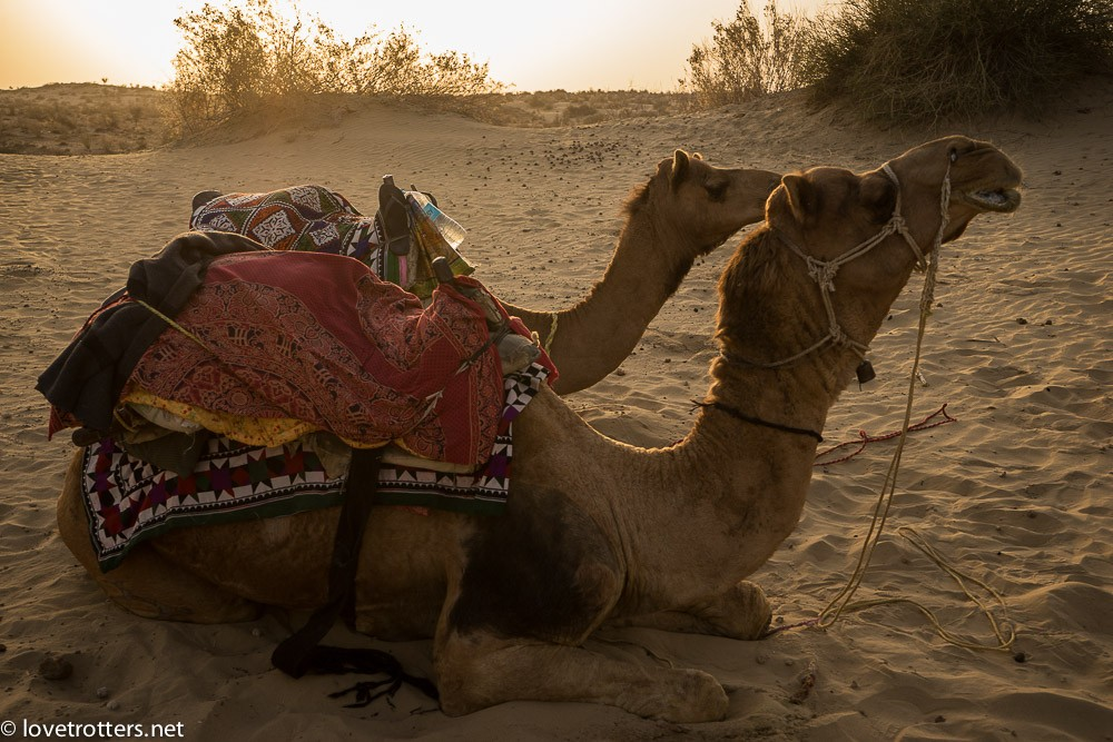 india-jaisalmer-camel-safari-00183