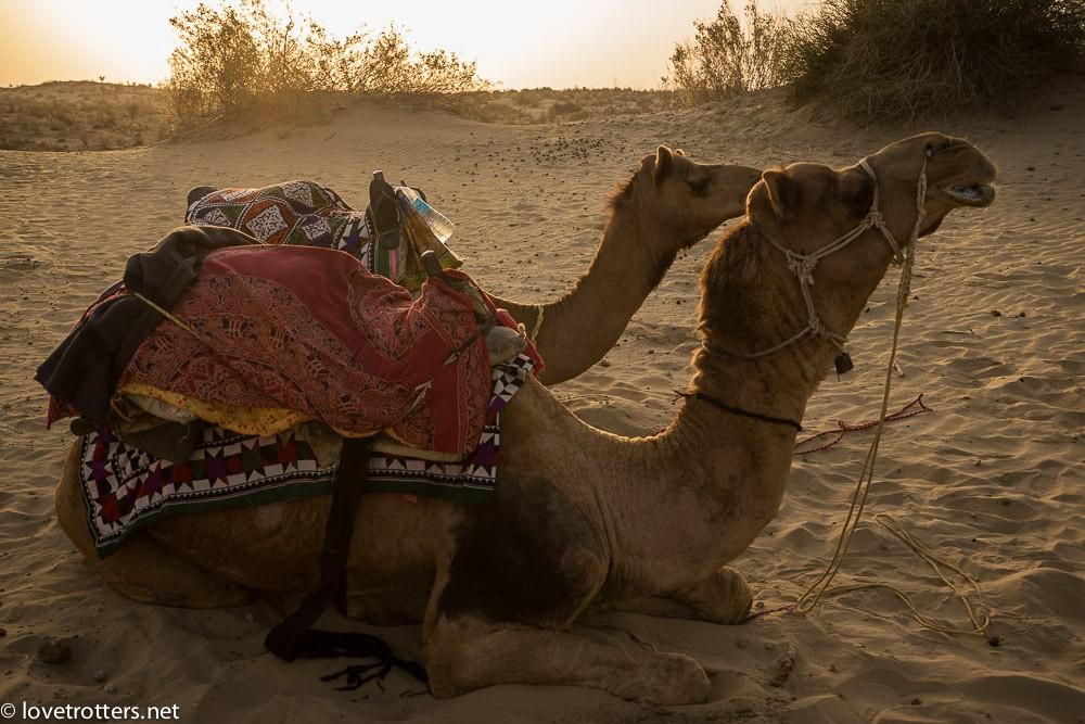 india-jaisalmer-camel-safari-00183