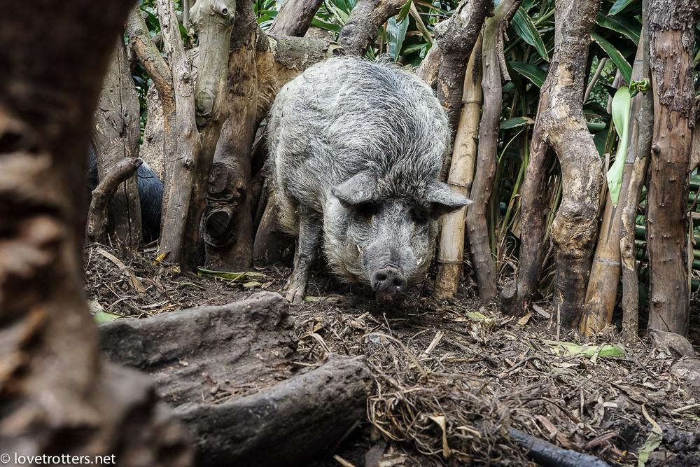 vanuatu-tanna-yakel-tribe-06503