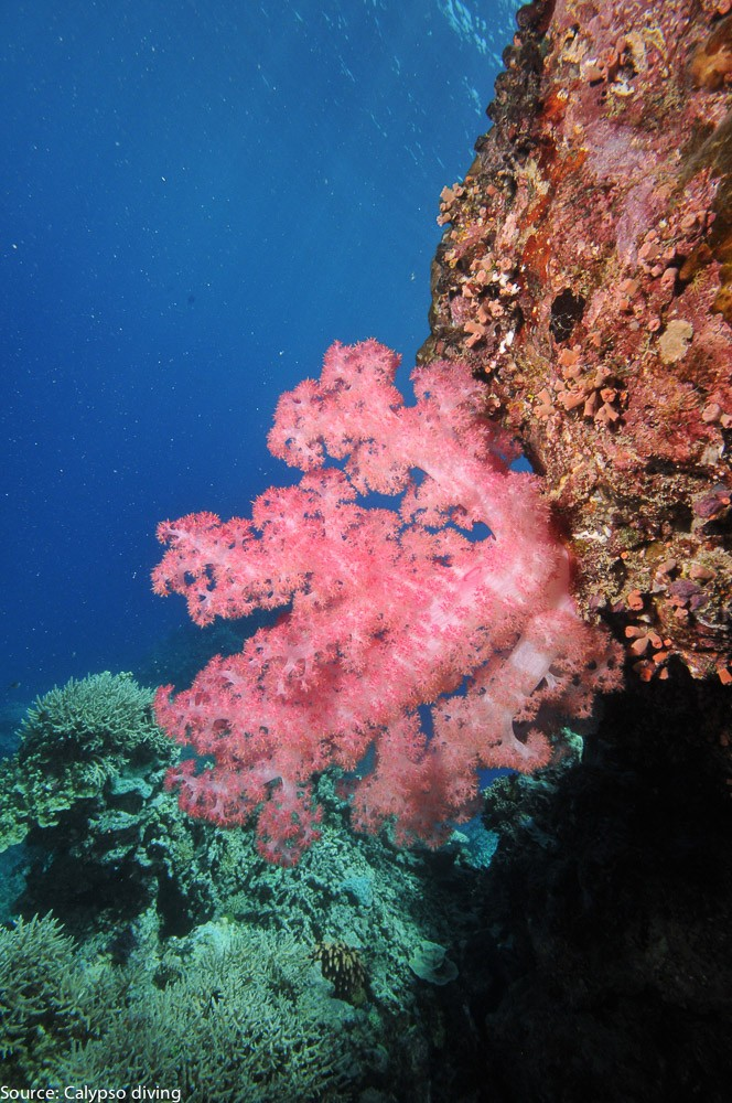 Great-Barrier-Reef-Diving-0318