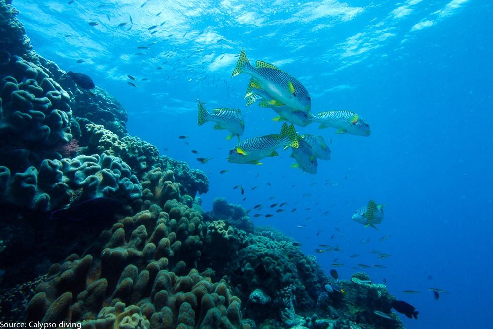 Great-Barrier-Reef-Diving-0616