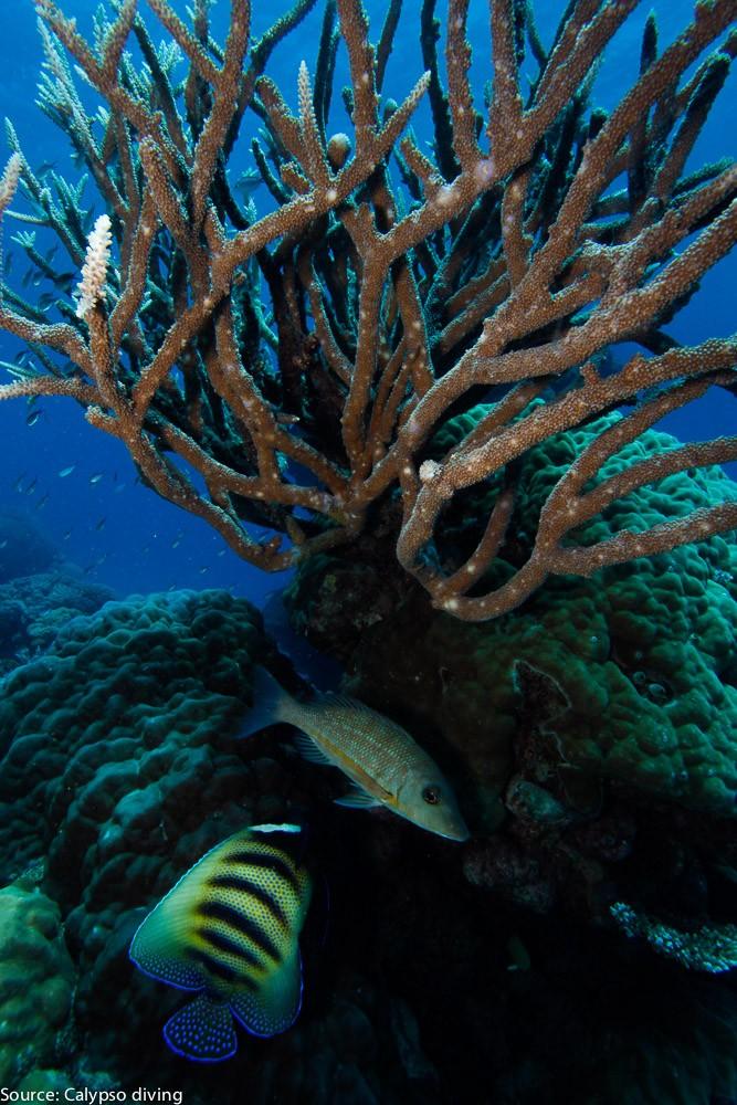 Great-Barrier-Reef-Diving-0868