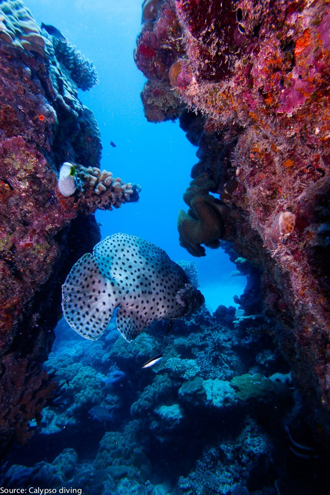 Great-Barrier-Reef-Diving-2