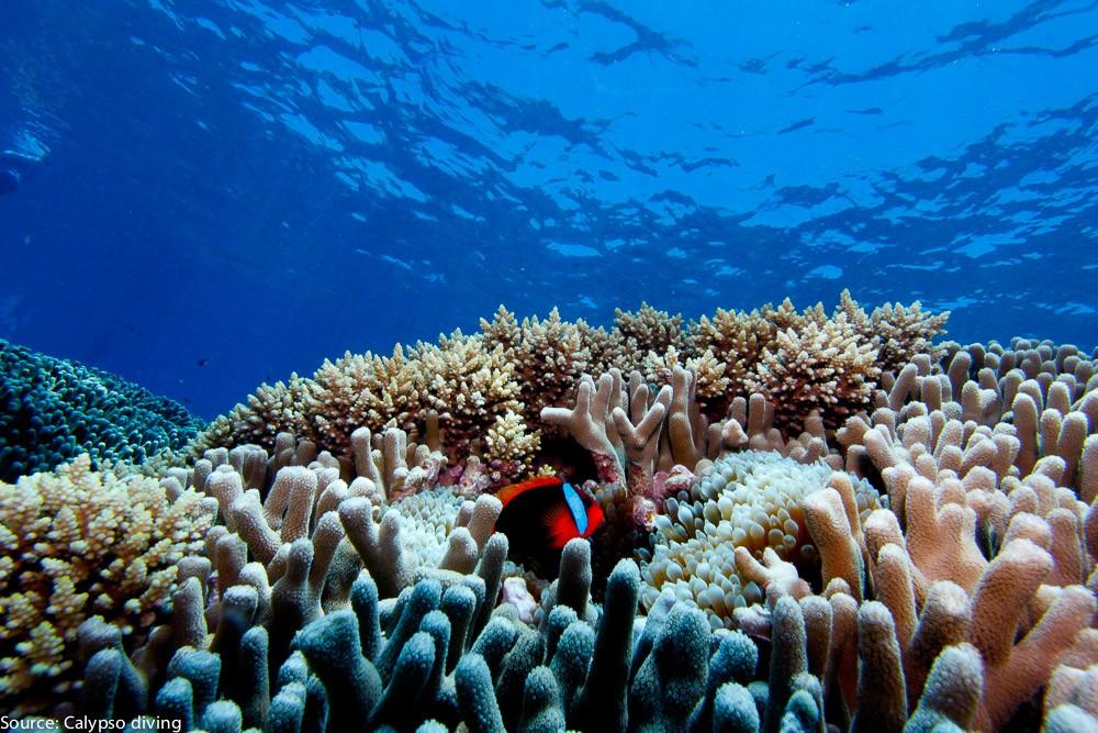 Great-Barrier-Reef-Diving-6077