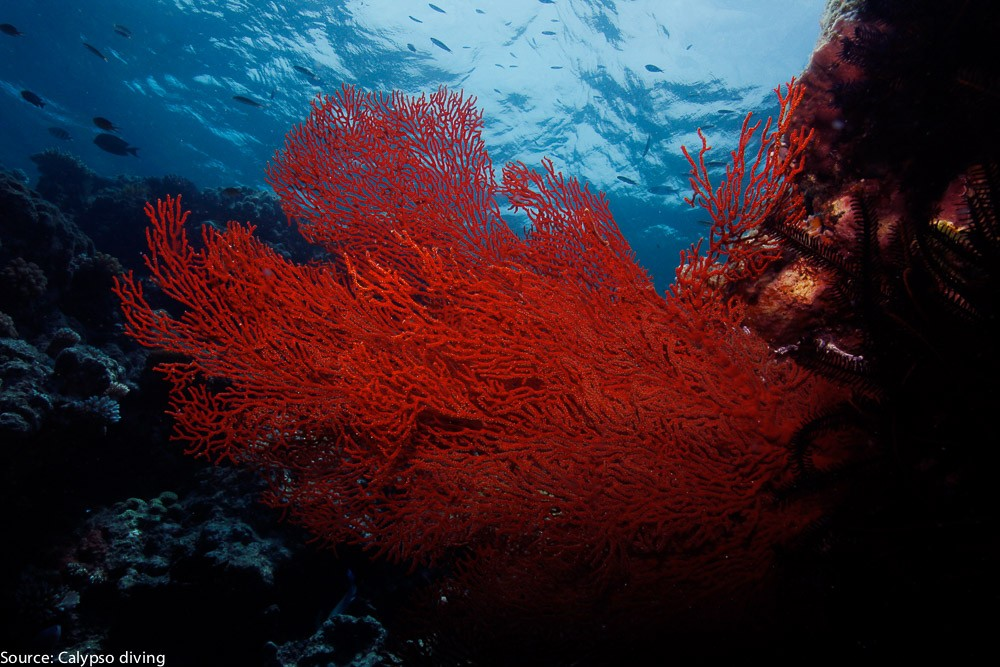 Great-Barrier-Reef-Diving-6375
