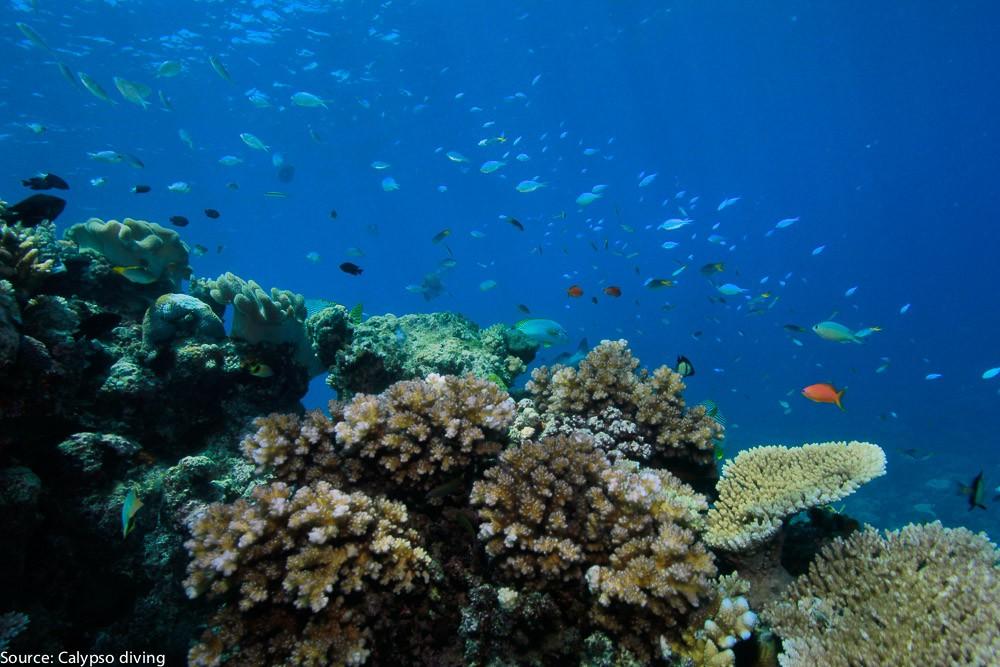 Great-Barrier-Reef-Diving-6930