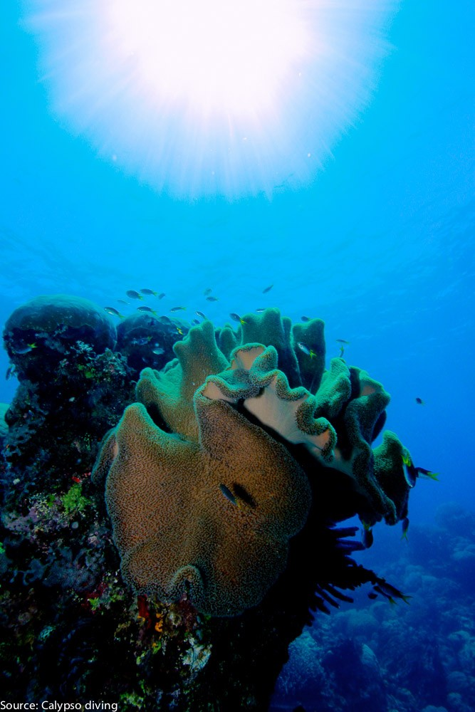 Great-Barrier-Reef-Diving-6962