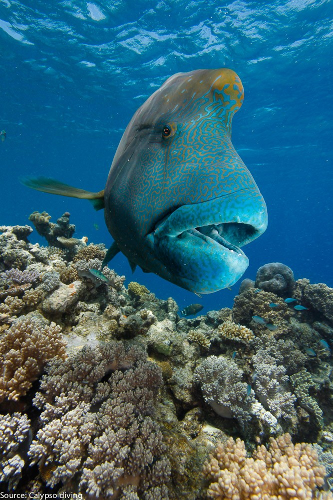 Great-Barrier-Reef-Diving-8738
