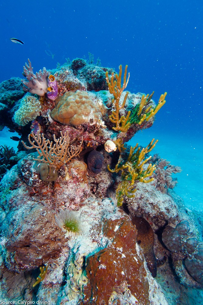 Great-Barrier-Reef-Diving-9620