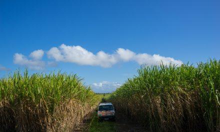 Roadtrip en campingvan au Queensland