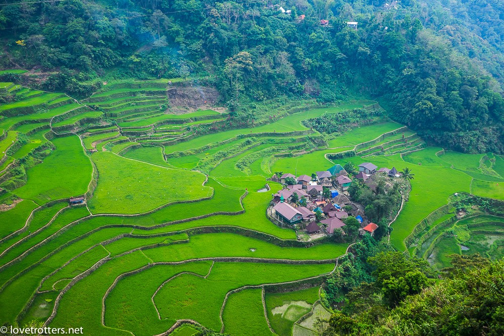 philippines-bangaan-rice-terraces-05084