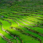 Guide pour l'exploration des terrasses de riz Ifugao aux Philippines
