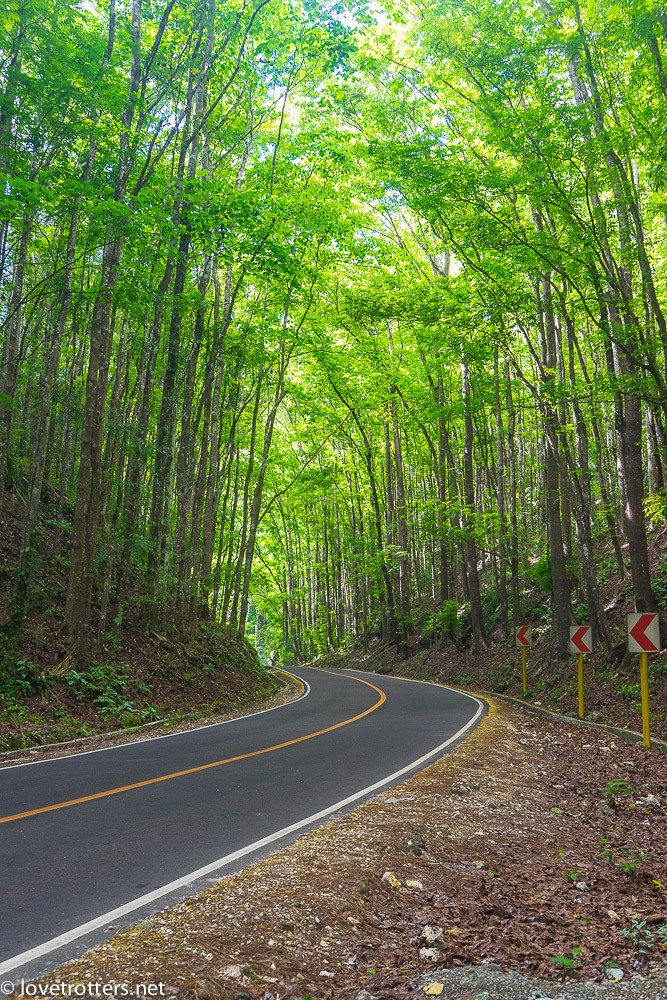 philippines-bohol-loboc-mahogany-man-made-forest-07218