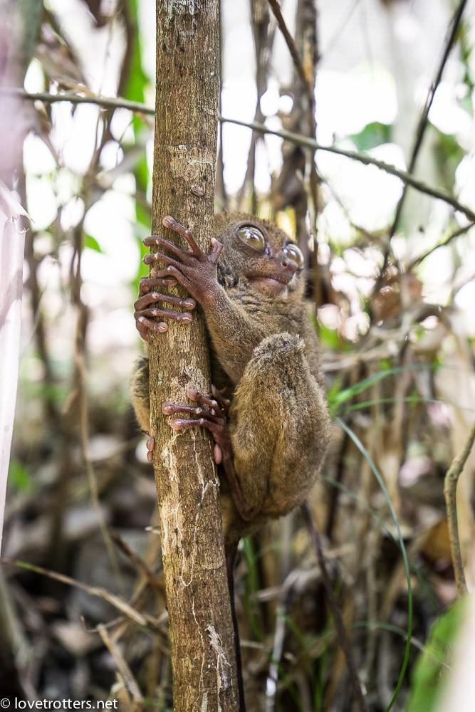 philippines-bohol-tarsier-sanctuary-07171