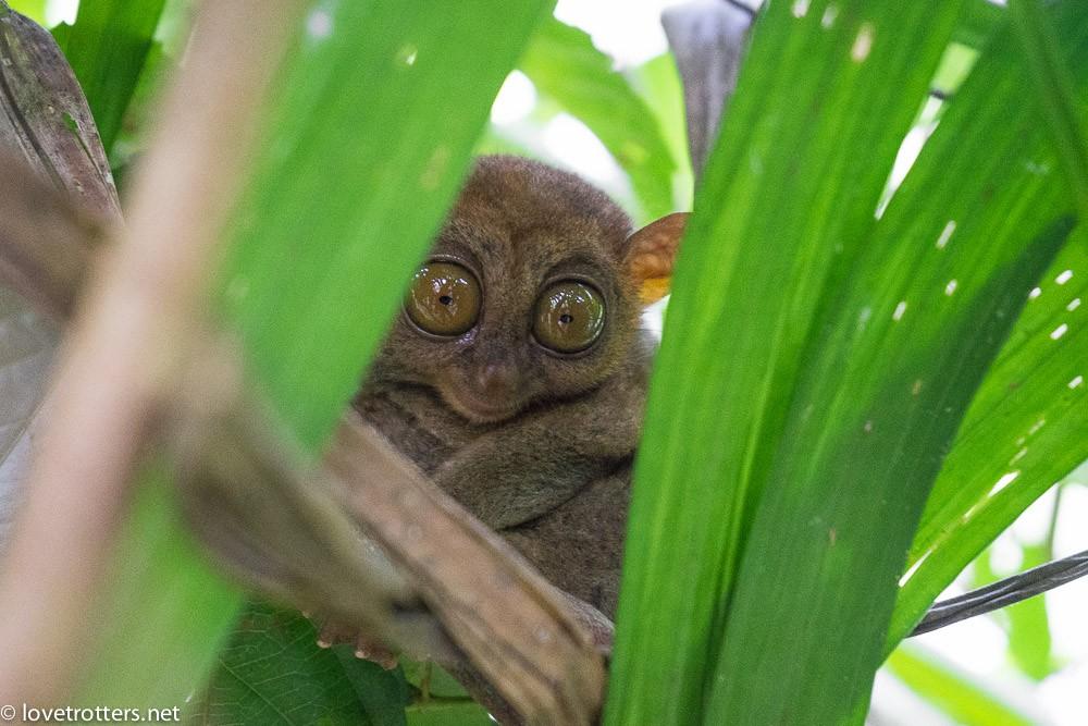 philippines-bohol-tarsier-sanctuary-07176