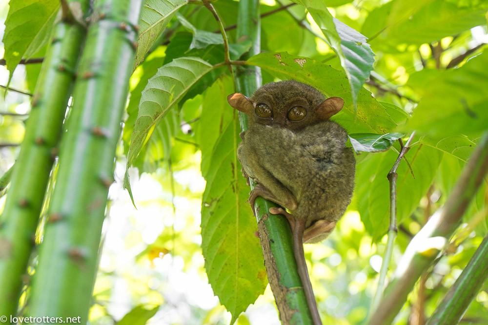 philippines-bohol-tarsier-sanctuary-07190