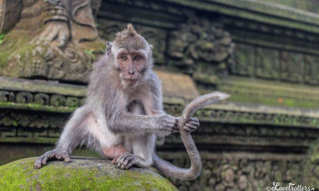 Itinéraires de voyage à Bali : Les circuits incontournables