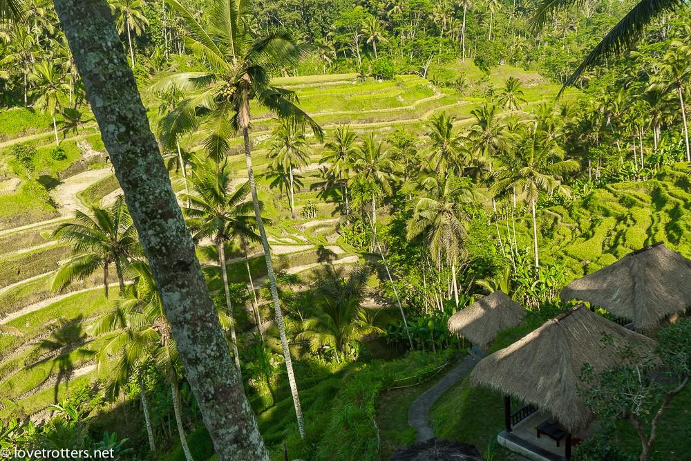 indonesia-bali-ubud-08487
