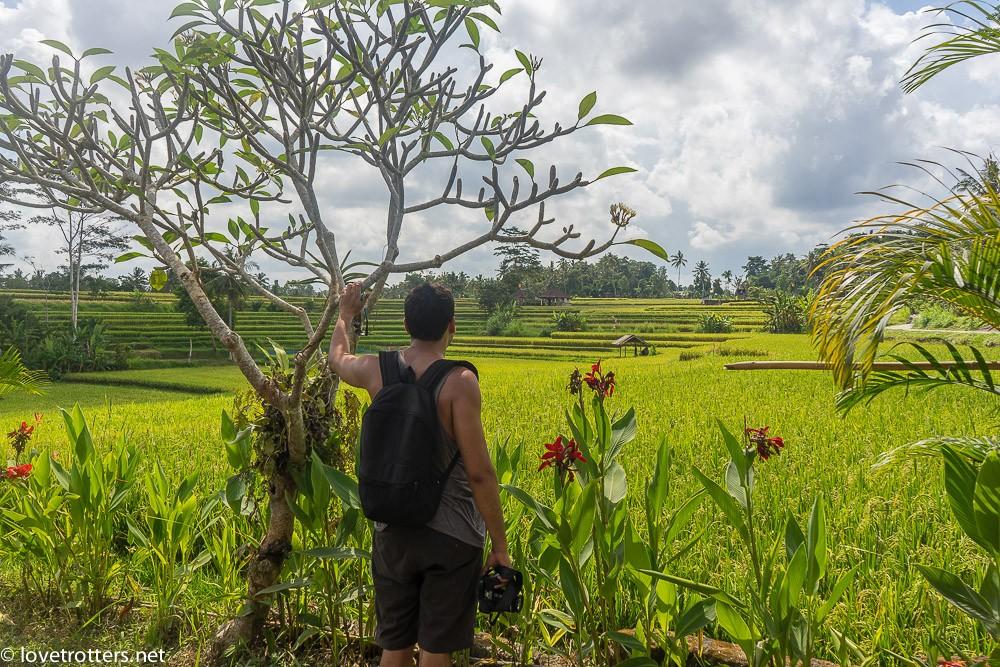 indonesia-bali-ubud-08665