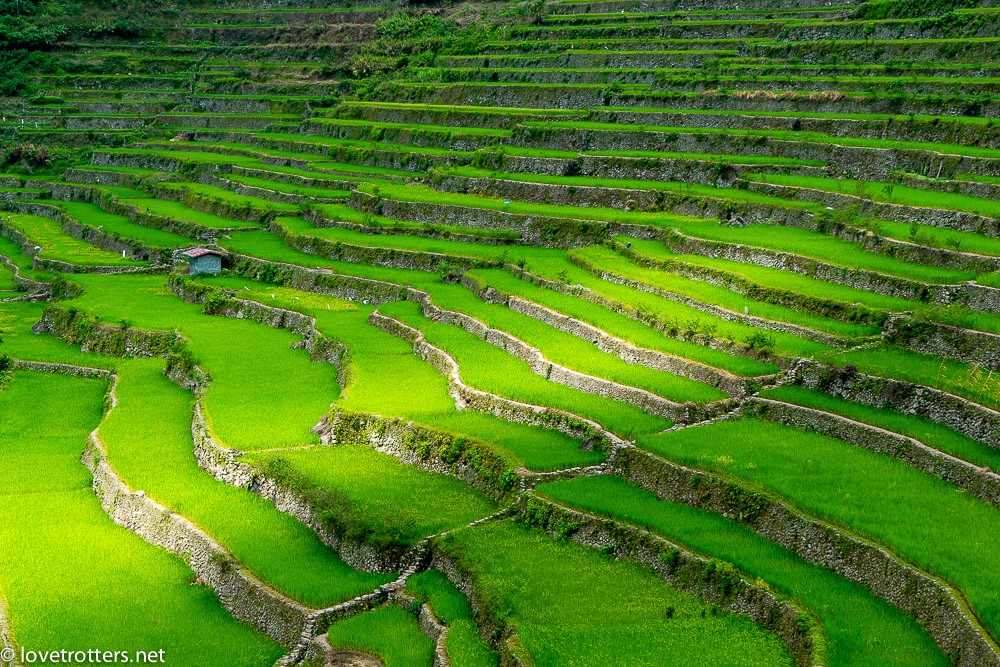 philippines-batad-rice-terraces-04978