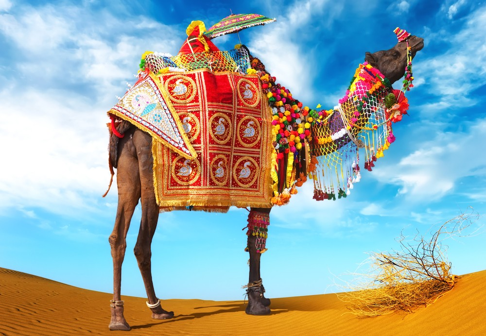 shutterstock-free-image-of-the-week-camel-in-fancy-dress