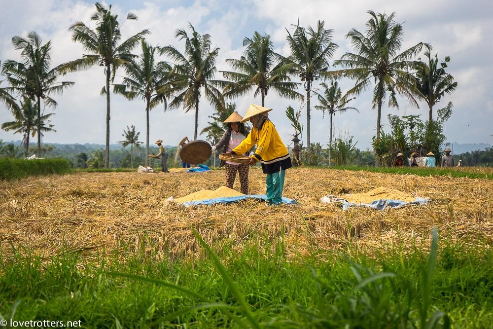 indonésie-bali-ubud-08271