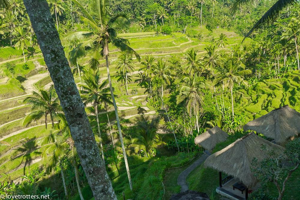 indonésie-bali-ubud-08487